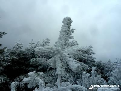 Acebos Montes Carpetanos; viajes de montaña; excursiones montaña madrid